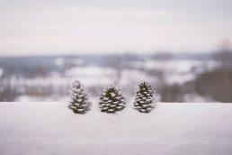 Dettaglio invernale