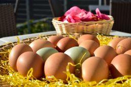 Uova fresche dal nostro agritur